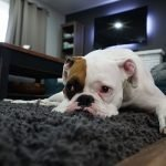 The Best Enzymatic Cleaners For Dog Urine - Your Ultimate Guide 7