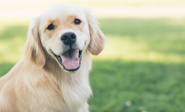Saying Goodbye To Your Dog: Euthanasia, Cremation & Grieving 1