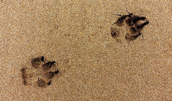 Saying Goodbye To Your Dog: Euthanasia, Cremation & Grieving 3