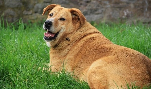 How To Fatten Up A Dog  & Encourage Healthy Weight Gain (Hint: Finding The Underlying Cause Is Key.) 1