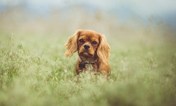 What Are The Best Low Maintenance Dog Breeds? 5