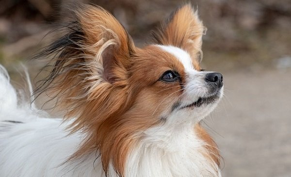 What Are The Longest Living Dog Breeds? 8