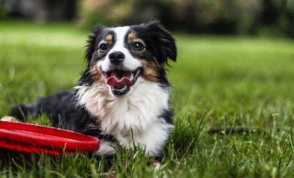 Melatonin For Dogs: An In-Depth Guide 3