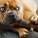 Why Does My Dog's Stomach Make Noises? (And Could It Be a Dangerous Health Issue?) 6