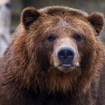 What Dog Looks Like a Bear? These 9 Dog Breeds Will Make You Look Twice... 18