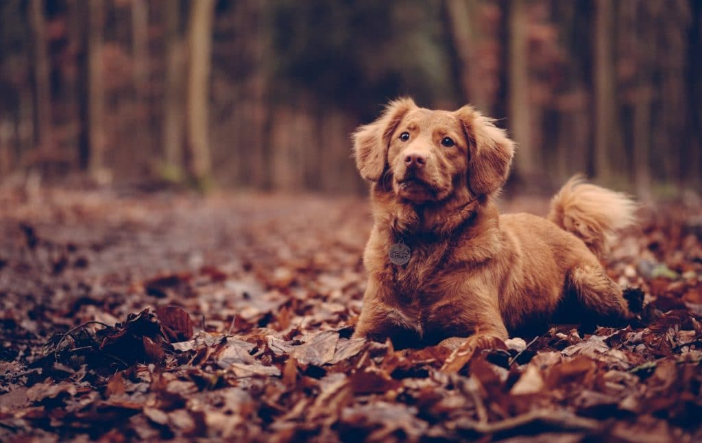 Can CBD Dog Treats Help My Dog? An In-Depth Guide To The (Potential) Benefits. 6