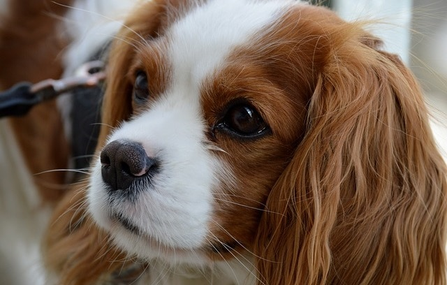 What's the Best Dog for First Time Owners? Here's Our Ultimate Guide 18