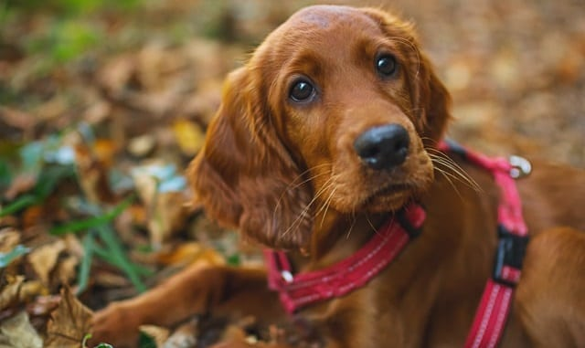 What's the Best Dog for First Time Owners? Here's Our Ultimate Guide 3