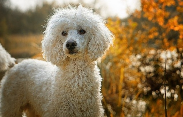 What's the Best Dog for First Time Owners? Here's Our Ultimate Guide 15