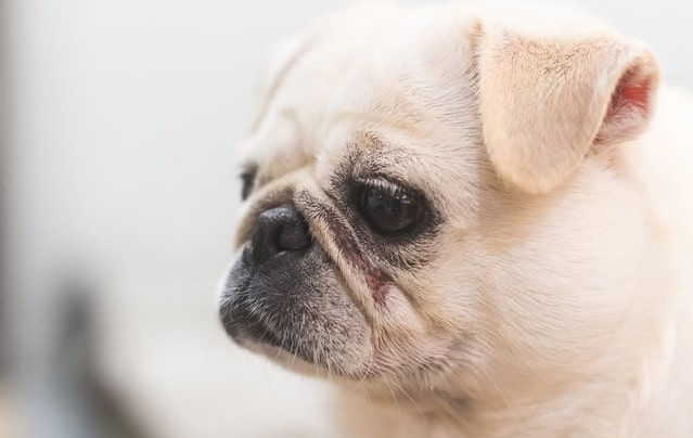 What's the Best Dog for First Time Owners? Here's Our Ultimate Guide 17