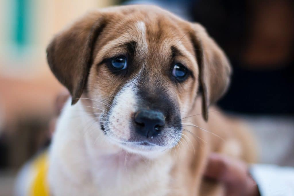 Why Does My Puppy Pee So Much? Here's What You Should Know. 3