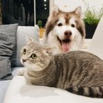 Can Dogs Eat Cat Food? What You Should Know First... 4