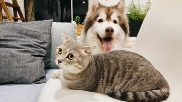 Can Dogs Eat Cat Food? What You Should Know First... 3