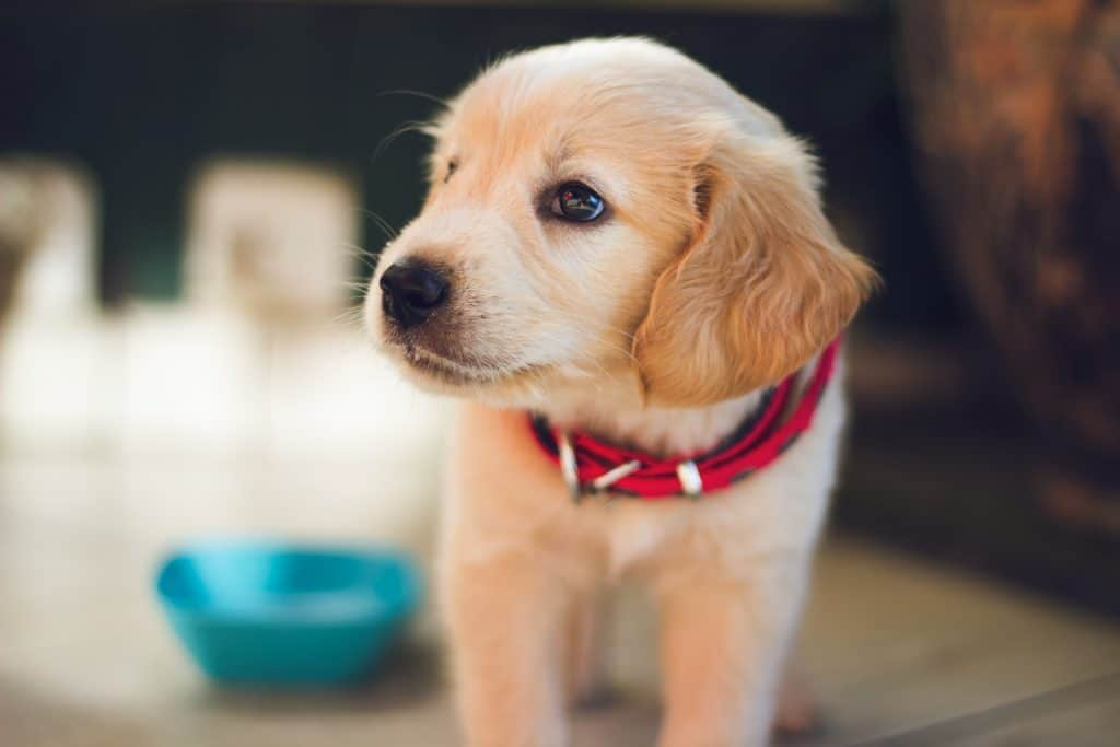 Can You Use Baby Wipes On Dogs? Here's What You MUST Know First 3