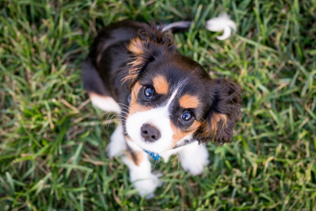 How Many Times a Day Should a Puppy Poop? (Hint: You'll Be Surprised...) 3